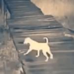 番犬が急にいなくなった…監視カメラの映像に犬を瞬殺した恐ろしいヤツが映っていた…