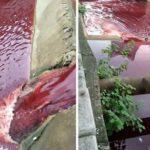 本物の血液で真っ赤に染まった川…その驚くべき原因に絶句…