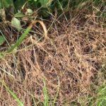 除草剤を使わずに草を枯らす超簡単な裏技…たったこれだけで・・・