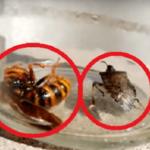 スズメバチとカメムシを同じ瓶に入れたらどうなる?こんな凄まじい戦いになるとは…