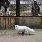 日本で仕入れた犬と騙されて購入した犬の正体…これはどう見ても…