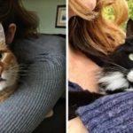猫をハグすることで得られる6つの効果…こんなにも効果があるんだと話題に…