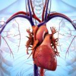 心臓が停止した後、脳内で何が起こるのか…心肺停止後の脳活動が話題に…