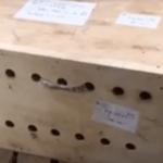 空港で一週間放置されたままの箱…開封して中に入っているものを見た職員たちは戦慄した…