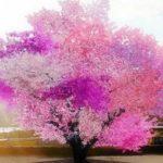1本で40種類の果実を実らせる奇跡の木…まさに魔法の木だと話題に…
