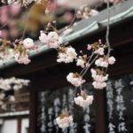 日本人だけが持つ感性…奥深い日本語の文化に海外が感動する…