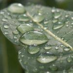 雨が降った時のあの独特の匂いの名前…言葉って素敵だと話題に…