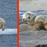 環境破壊が地球上の自然にもたらす影響…どれだけ深刻なのかわかる画像が話題に…