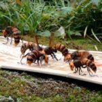 富山の害虫駆除会社によるオオスズメバチの駆除方法…こんな方法があるのか…
