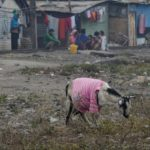 性的暴行事件が多いインド…ヤギに性的暴行という恐るべき事件が発生…