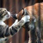 飼育放棄された孤独なリンクスを救ったアイデア…改めて動物の無償の愛を感じさせる…
