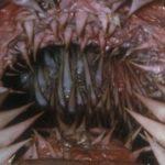 世界で最も恐ろしい歯を持つ生物たち…みんな違ってみんなキモイ…