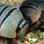 【閲覧注意】地球上に存在する危険な虫たち…遭遇したらすぐ逃げて!