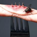 ハエはゴキブリより2倍のバイ菌持ち…ハエのおぞましい生態が話題に…