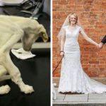 残酷なカップルに虐待され餓死寸前だった1匹の犬…新たな飼い主の元で生まれ変わる姿に涙…