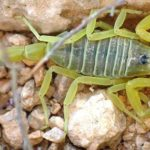 世界で最も危険な恐ろしい虫6選…遭遇したらすぐに逃げて!