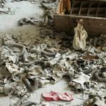 災害の為に廃墟化したゴーストタウン…災害は恐ろしいと話題に…