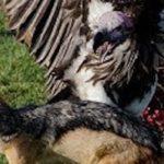 世界で最も危険とされる鳥6選…遭遇したらすぐ逃げて!