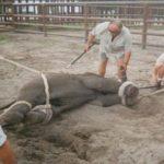 見世物にするためだけに耐えがたい苦痛を受ける動物たち…人間のエゴは恐ろしいと話題に…