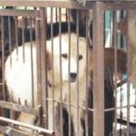 飼い主によって犬肉用ドックファームに売られた犬…二匹の犬に起こった奇跡が話題に…