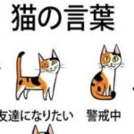 これでアナタも猫の言葉や感情を理解できる!?猫の気持ちを読み取る方法とは…