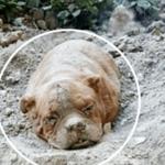 散歩の途中で急に砂山を掘り出した愛犬…そこには生き埋めにされた一匹の犬が…