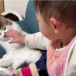 子供に乱暴に扱われても絶対に怒らない猫…とっても賢くて優しい猫だった…